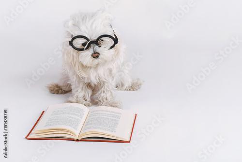 Obraz na plátně perro gracioso con gafas y un libro