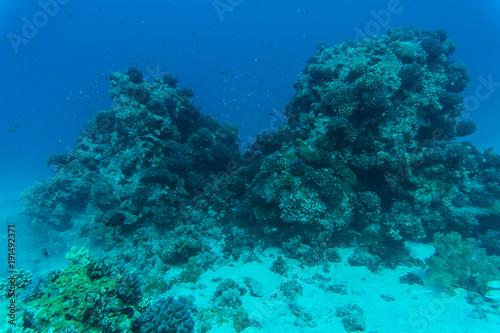Plakat Czerwonego morza podwodna rafa koralowa z ryba