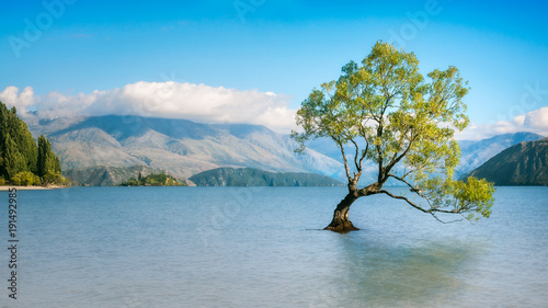 In de dag Bomen Wanaka Tree on a Serene Morning in New Zealand