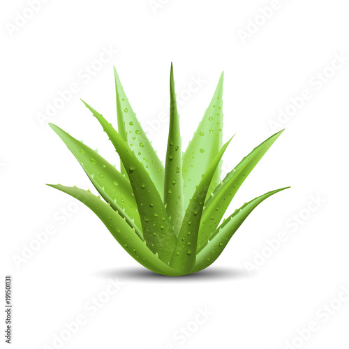 Canvastavla aloe vera with fresh drops of water