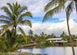 Hawaii palm trees and sky background
