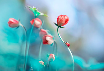 Beautiful pink flowers anemones and ladybug in spring nature outdoors against blue sky, macro, soft focus. Magic colorful artistic image tenderness of nature, spring floral wallpaper.
