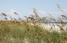 Sea Oats On A Beach