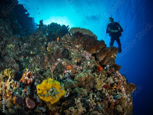 Tuinposter Koraalriffen Sea Pics