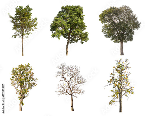 Fotografija  Isolated collection tree on white background