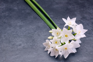 Two stems of small white narcissus flowers