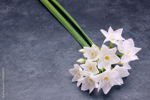 Fototapeta Two stems of small white narcissus flowers