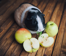 The Guinea Pig Sits Next To Th...