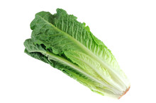 Fresh Romaine Lettuce Isolated...