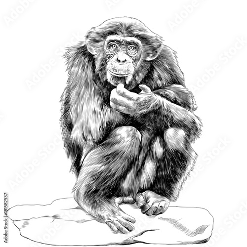 Fotografie, Obraz chimpanzee sitting on a rock and scratches his chin sketch vector graphics monoc