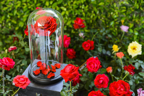 Fotografia  The eternal roses in the flask on the garden