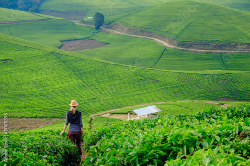 Photo Stands Olive Woman/tourist walking through tea plantation field in Rwanda, Africa