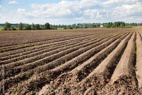 Fotografía  распаханное поле для посадки картофеля