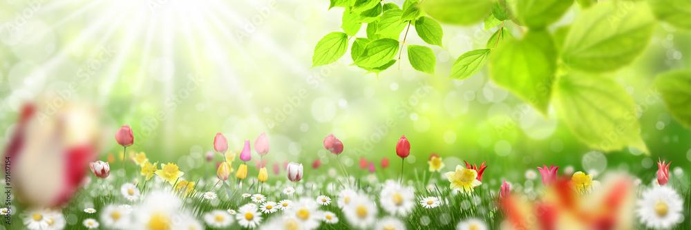 Frühling 434