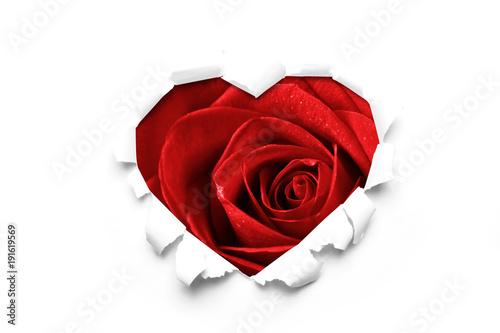 Fototapety, obrazy: Rosen zum Valentinstag