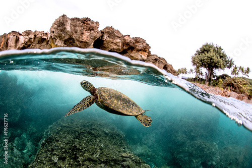 Fotobehang Schildpad Beautiful Green sea turtle swimming in tropical island reef in hawaii, split over/underwater picture