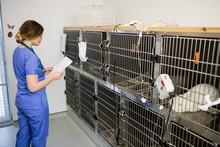 Vet Monitoring Sick Rabbit In ...