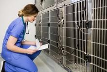 Vet Monitoring Sick Rabbit In Cage