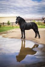 Black Horse Percheron Outdoor ...