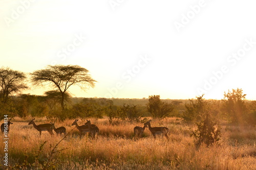 Foto op Plexiglas Afrika Morning of Savanna