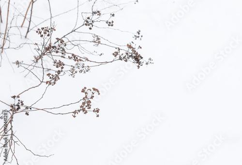 piekne-galezie-busha-w-zimie-kwiaty-trawa-tlo