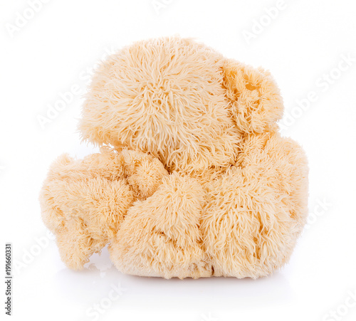 Cuadros en Lienzo lion mane mushroom isolated on white background