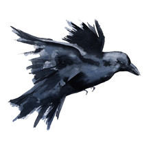 Black Raven. Isolated On White Background.