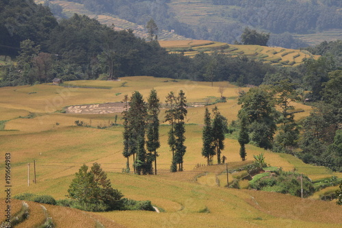 Fotobehang Grijs yellow fields landscape