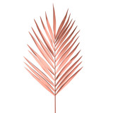 Tropical Palm leaf isolated on white background. Golden pink Palm frond Vector illustration. - 191666922