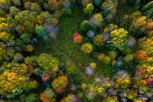 Autumn Forest Aerial