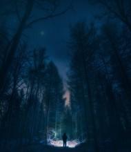 Surreal Night Forest Landscape...