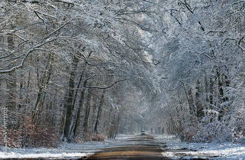 Papiers peints Taupe Route forestière enneigée en forêt de Fontainebleau
