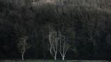 Sztuka piękna krajobrazowy wizerunek surowi biali drzewa w lasu tle - 191723507