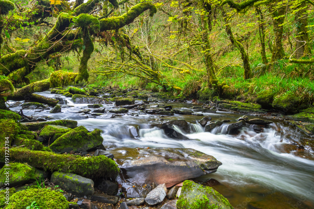 Fototapeta Mountain creek of Clare Glens in Co. Limerick, Ireland