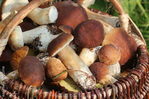Fototapeta  Basket full of fresh boletus mushrooms in forest