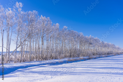 Fotografie, Obraz  北海道・霧氷の風景