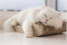 Chilled Out Cat Taking A Nap O...