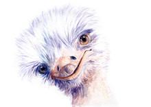 Watercolor Ostrich. Sketch