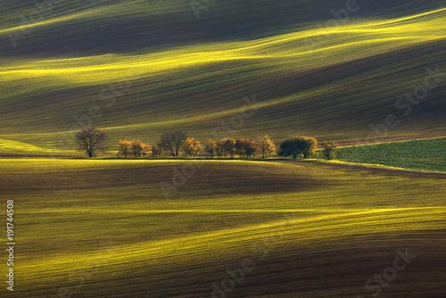 Fotografia  Agricultural Rolling Spring / Autumn Landscape
