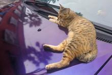 Cat Climb On Car Can Damage Pa...