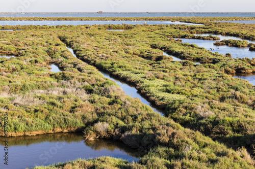 Marisma de verde vegetación en la Laguna de La Tancada en el Parque Natural del Delta del Ebro