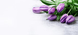 Fototapeta Tulipany - luxurious fresh fashionable purple tulips on a wooden background