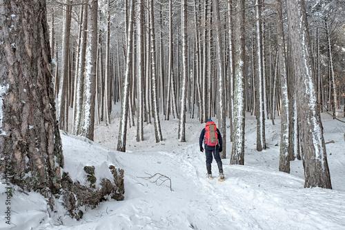 Fotografie, Obraz Hiking In Winter Etna Park, Sicily