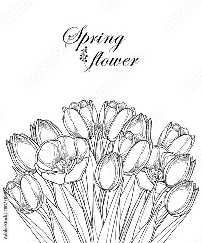 Vector bouquet with outline tulip flowers, bud and ornate ...