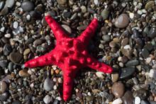 Red Starfish On Gravel, Seasho...