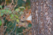 Squirrel8