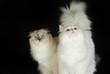 Zwei Katzen sehen nach oben