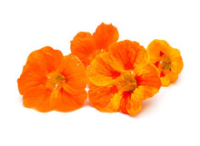 Bouquet Of Orange Nasturtium Flowers Isolated On White Background. Flat Lay, Top View