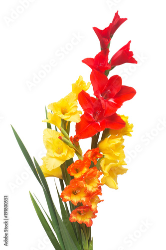 Beautiful bouquet of multicolored gladiolus flowers isolated on white background Canvas Print