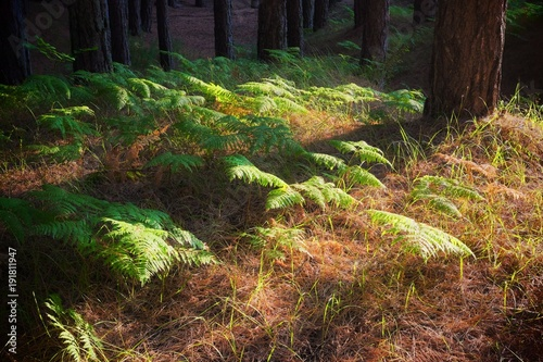 Undergrowth Vegetation In Pine Forests Of The Etna Park, Sicily Canvas-taulu